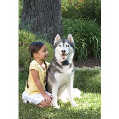 PetSafe In-ground digitale omheining voor grote hond boven 3,6 kg 6091