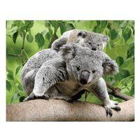 Dieren magneet 3D koalaberen