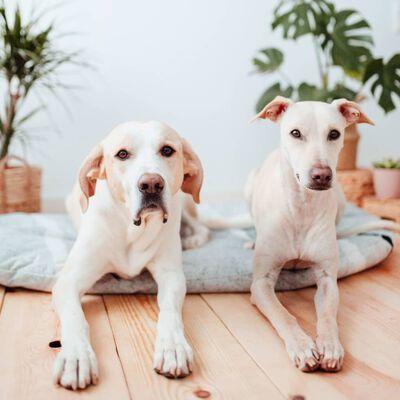 DISTRICT70 Hondenkussen PEBBLE L lichtgrijs