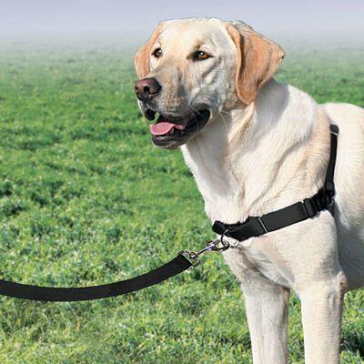 PetSafe Hondentuig Easy Walk L zwart