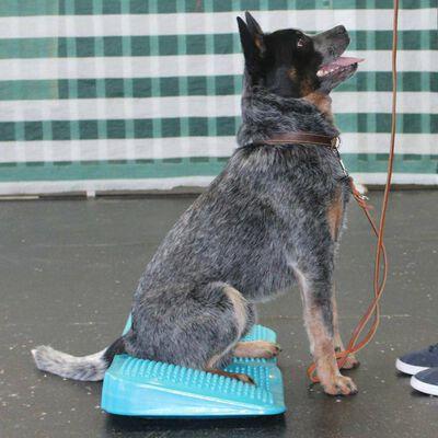 FitPAWS Huisdieren balanshelling 35x35x7 cm blauw