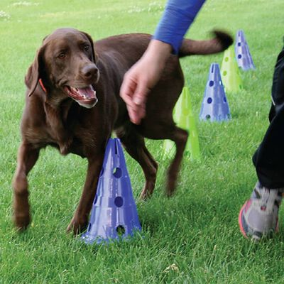 FitPAWS Honden behendigheidsset Canine Gym