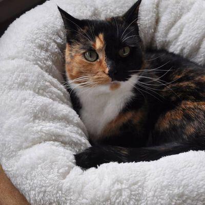 afp Katten-/hondenmand donutvormig lamswol bruin