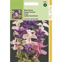 2 stuks Salvia Horminum Tricolor Gemengd
