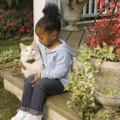 PetSafe Elektrisch inperkingssysteem Deluxe In-Ground Cat Fence 6038